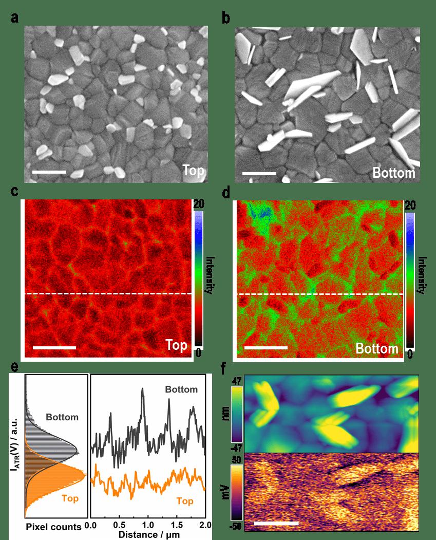 图3. 钙钛矿多晶薄膜顶面与底面的形貌、组分与电势分布