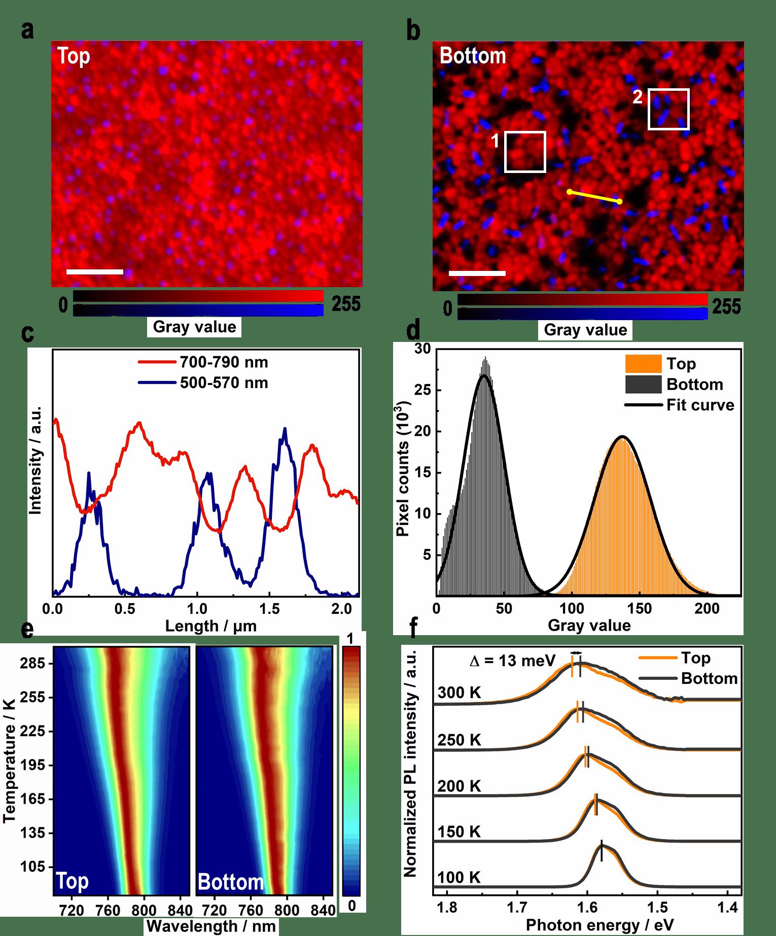 图4. 钙钛矿多晶薄膜顶面与底面的变温荧光及多通道荧光成像